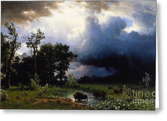 The American Buffalo Greeting Cards - Buffalo Trail The Impending Storm Greeting Card by Albert Bierstadt