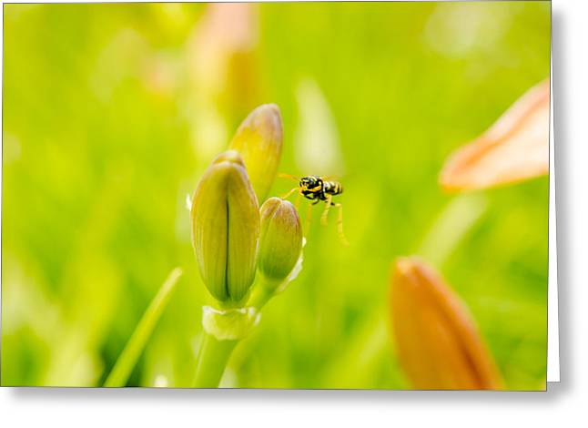 Day Lilly Greeting Cards - Bug Incoming Greeting Card by Kathy Paynter