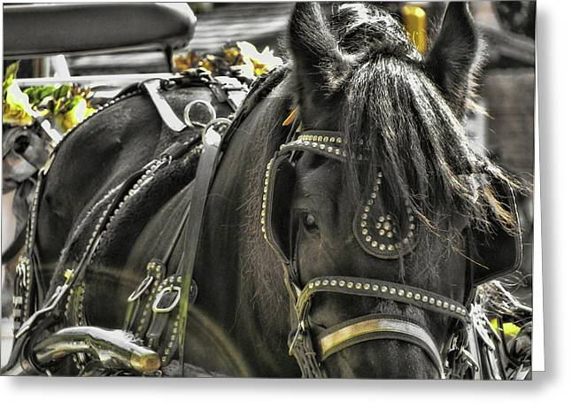 Buggy Whip Greeting Cards - Buggy Tour Greeting Card by JAMART Photography