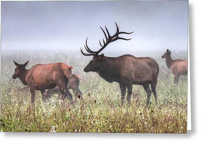 Bull Elk Misty Morning Greeting Card by Carol R Montoya