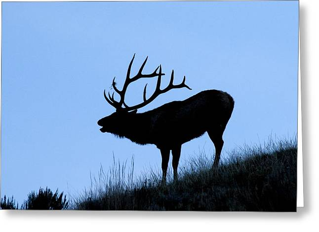 Rut Greeting Cards - Bull Elk Silhouette Greeting Card by Larry Ricker