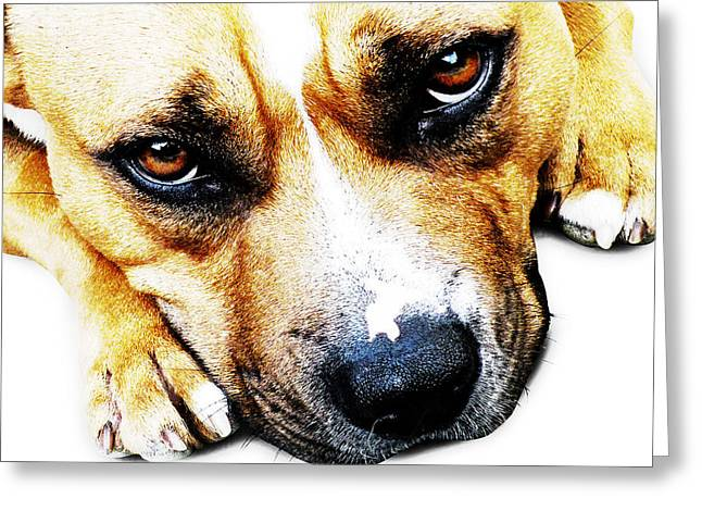 Stafford Greeting Cards - Bull Terrier Eyes Greeting Card by Michael Tompsett