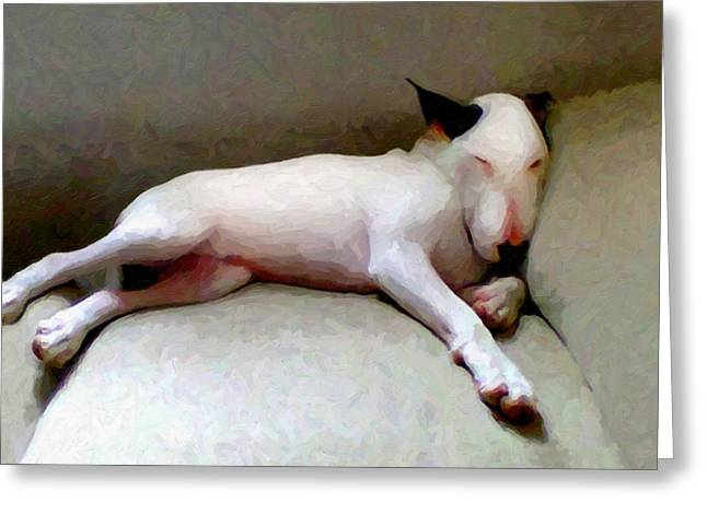 Oil Mixed Media Greeting Cards - Bull Terrier Sleeping Greeting Card by Michael Tompsett