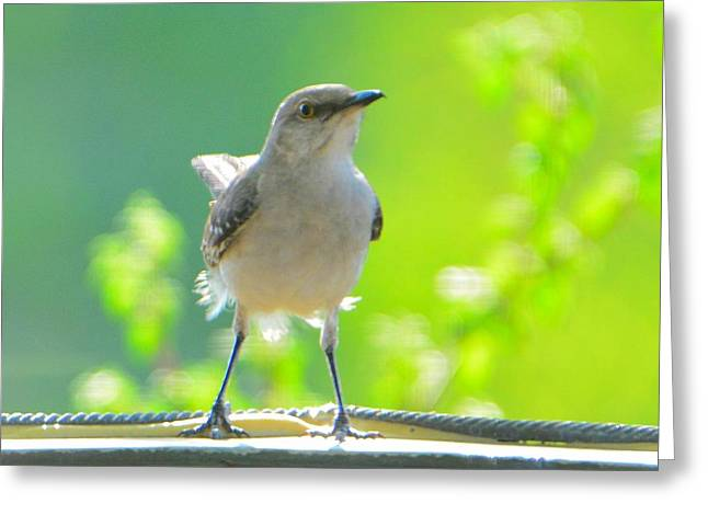 Mockingbird Greeting Card by Josephine Buschman