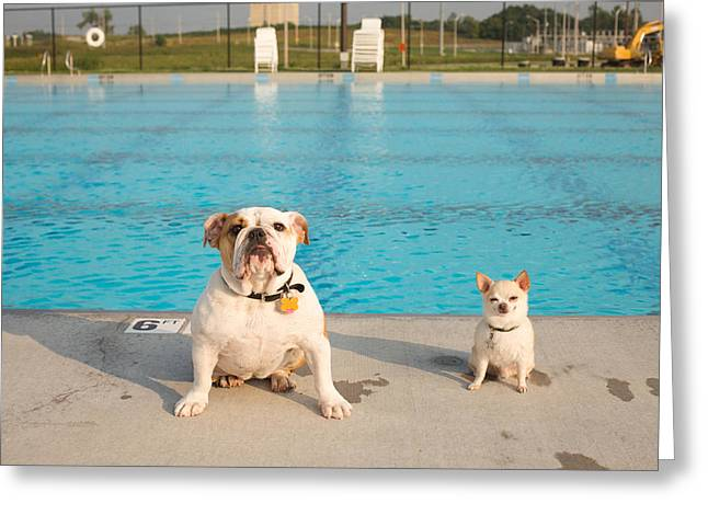 Happy Dogs Cute Dogs Greeting Cards - Bulldog And Chihuahua By The Pool Greeting Card by Gillham Studios