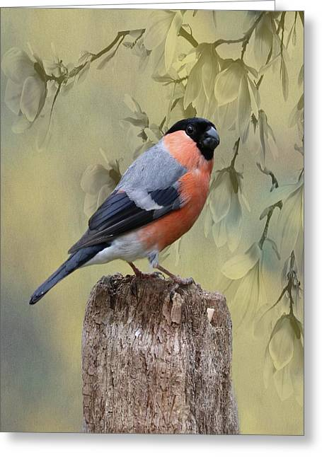 Bullfinch Bird Greeting Card by Movie Poster Prints