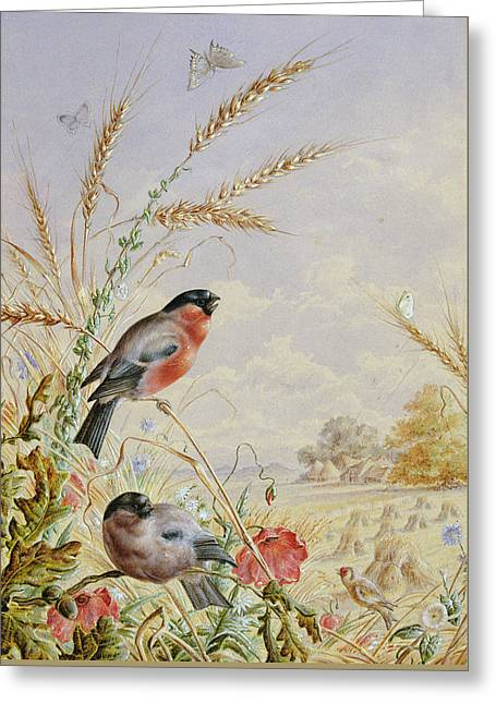 Bullfinches In A Harvest Field Greeting Card by Harry Bright