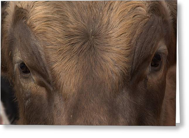 Swiss Photographs Greeting Cards - Bulls Eye Greeting Card by Frank Guemmer