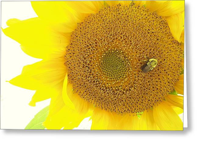 Maine Farms Greeting Cards - Bumble Bee Sunflower Greeting Card by Lisa Gilliam