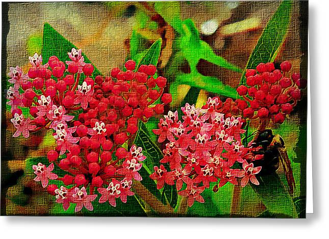 Rebecca Matthews Greeting Cards - Bumblebee and Butterfly Weed Greeting Card by Rebecca Matthews
