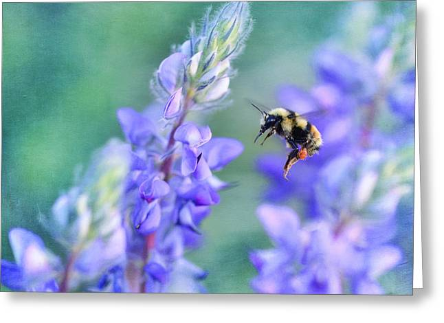 Bumblebee Greeting Cards - Bumblebee and Lupine Greeting Card by Priska Wettstein