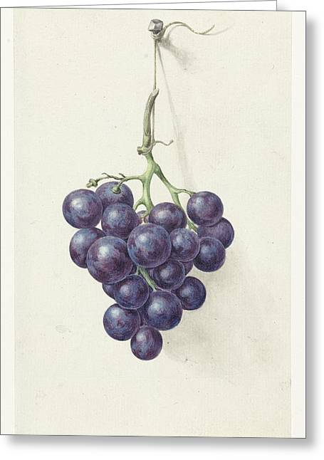 Bunch Of Blue Grapes Greeting Card by MotionAge Designs