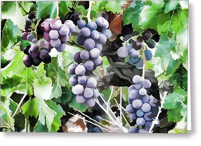 Bunches Of Wine Grapes  Greeting Card by Lanjee Chee