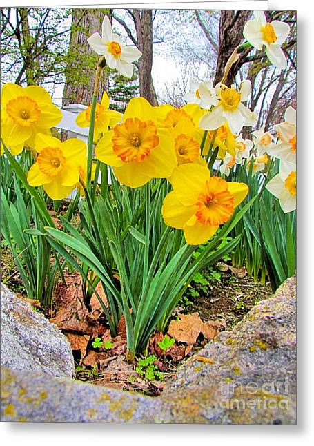 Maine Spring Greeting Cards - Bundle of Beauties Greeting Card by Elizabeth Dow
