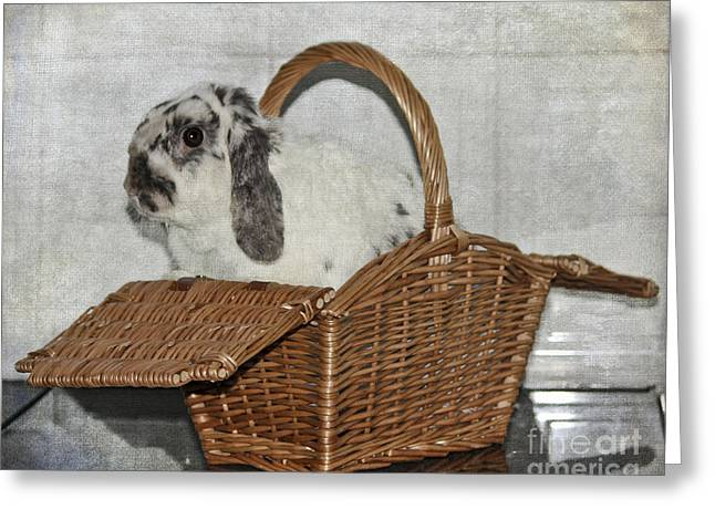 Bunnie Greeting Cards - Bunny in a Basket Greeting Card by Terri  Waters
