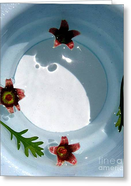 Best Sellers -  - Ying Greeting Cards - Buoyant Greeting Card by Dani Marie