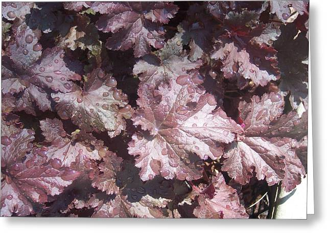 Anna Villarreal Garbis Greeting Cards - Burgandy Leaves after the Rain Greeting Card by Anna Villarreal Garbis