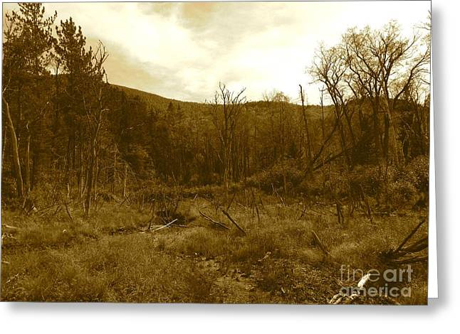Mountain Road Greeting Cards - Burn Road Greeting Card by Noelle  Short