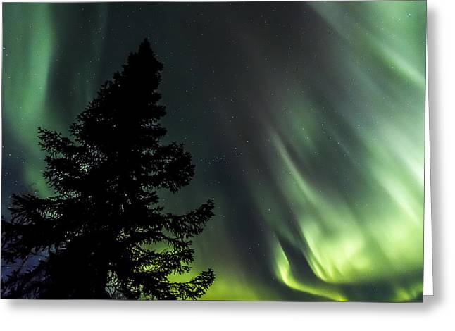 Northernlights Greeting Cards - Burning Tree 3 Greeting Card by Kyle Lavey