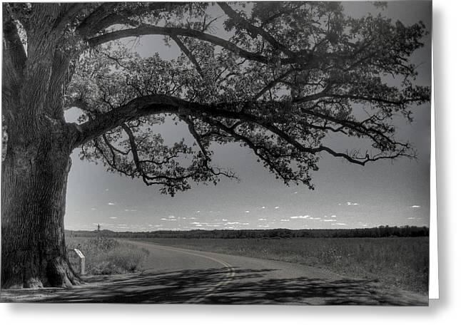 Missouri Photographer Greeting Cards - Burr Oak Tree Greeting Card by Jane Linders