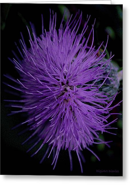 Indiana Flowers Greeting Cards - Burst of Violet Greeting Card by DigiArt Diaries by Vicky B Fuller