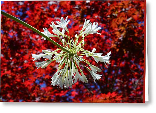 4th July Photographs Greeting Cards - Bursting In Air Greeting Card by Donna Blackhall