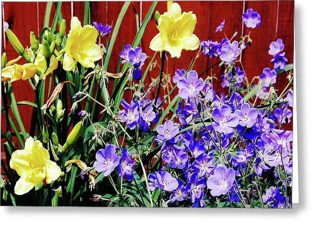 Day Lilly Greeting Cards - Bursting in Air Greeting Card by Kathryn Gainard