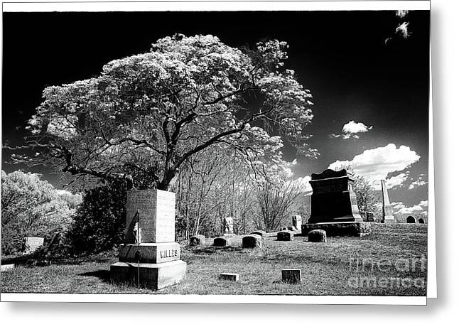 Bury Me Under A Tree Greeting Card by John Rizzuto