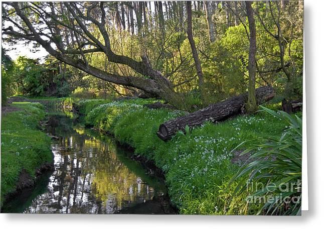 Sardinelly Greeting Cards - Bush Creek Greeting Card by Yurix Sardinelly