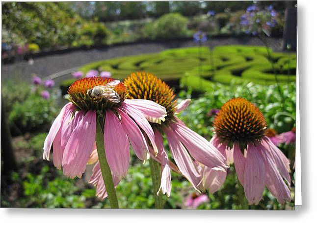 Getty Greeting Cards - Busy Bee Greeting Card by Nancy Ingersoll