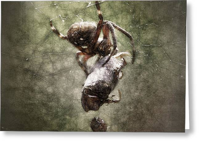 Feeding Mixed Media Greeting Cards - Busy Spider Greeting Card by Richard Rizzo