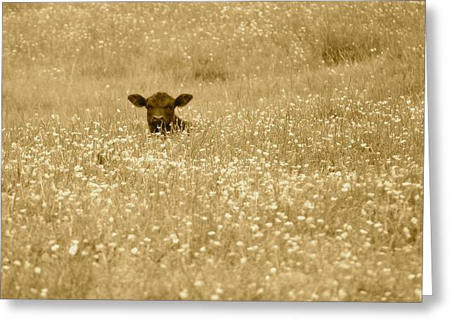 Buttercup In Sepia Greeting Card by JD Grimes