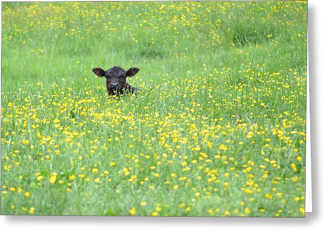 Buttercup Greeting Card by JD Grimes