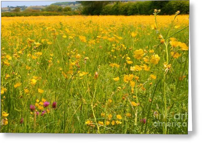 Shabbychic Greeting Cards - Buttercup Meadows. Greeting Card by ShabbyChic fine art Photography