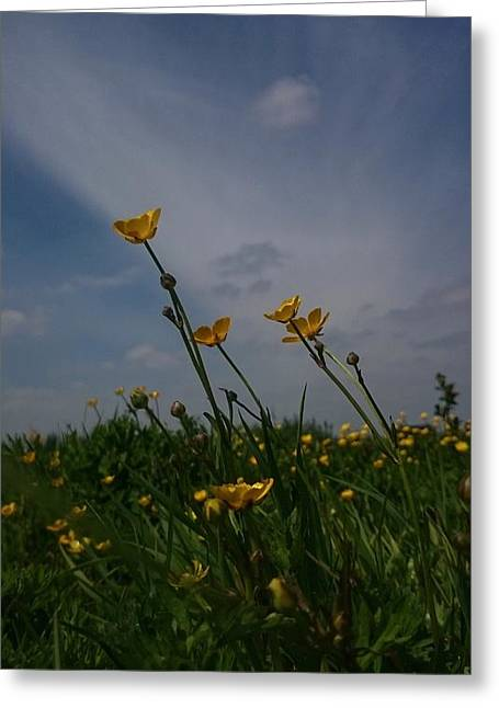 Virulent Greeting Cards - Buttercups Greeting Card by Isabella Abbie Shores