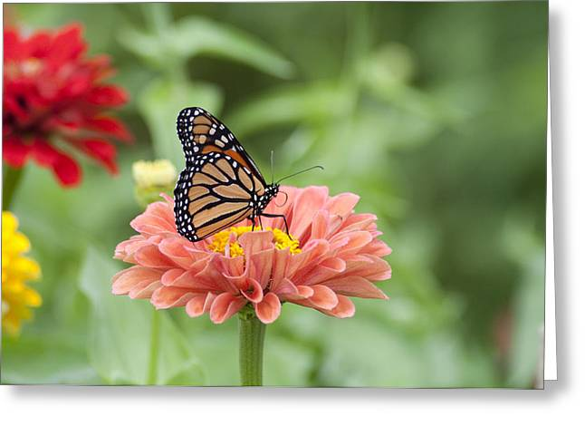 Butterflies and Blossoms Greeting Card by Bill Cannon