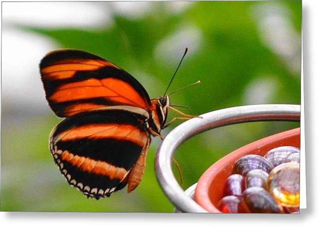 Recently Sold -  - Marble Eye Greeting Cards - Butterflies Are Blooming Greeting Card by Debra  Miller