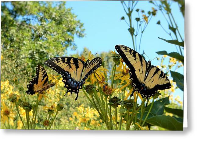 Butterflies Greeting Card by Brian McGary