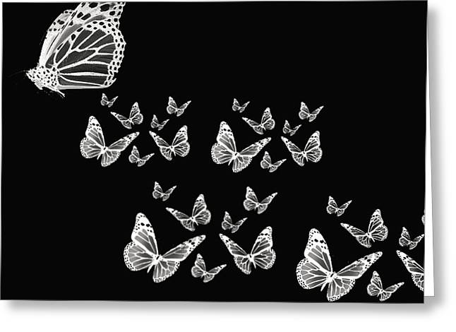 White Photographs Greeting Cards - Butterflies Greeting Card by Lourry Legarde