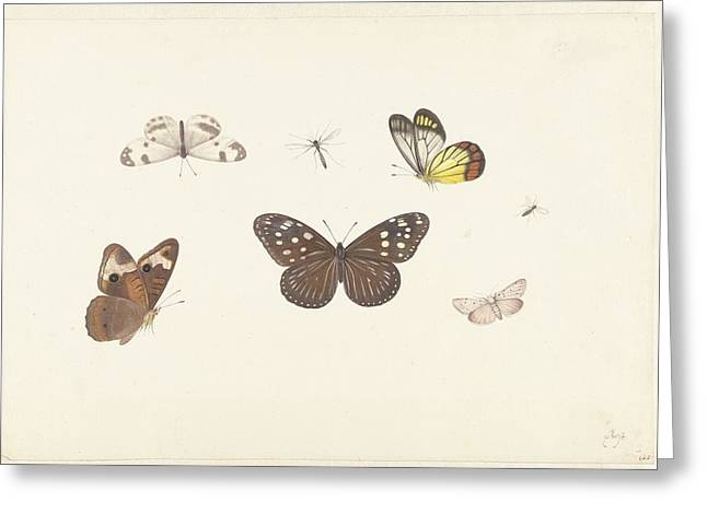 Butterflies Greeting Card by Pieter Withoos