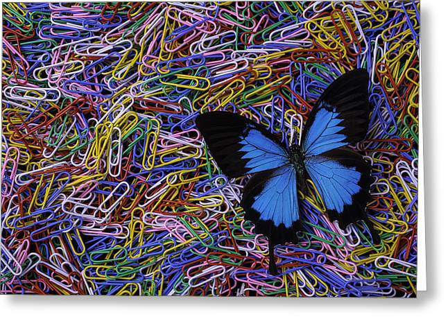 More Ideas Greeting Cards - Butterfly And Paperclips Greeting Card by Garry Gay