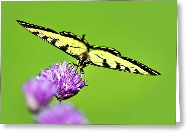 Butterfly On Flower Greeting Cards - Butterfly Art Of Balance Greeting Card by Christina Rollo