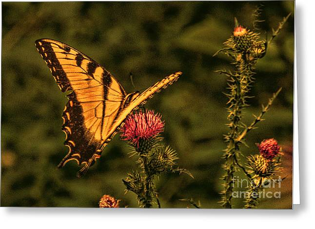 Butterfly At Sunset Greeting Card by Kathy Liebrum Bailey
