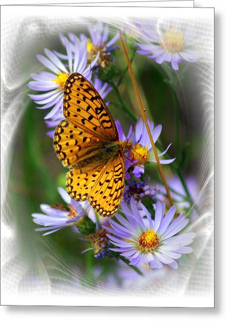 Butterfly Bliss Greeting Card by Marty Koch