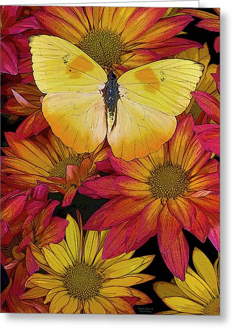 Detail Paintings Greeting Cards - Butterfly Detail Greeting Card by JQ Licensing