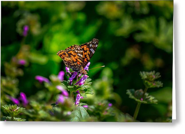 Biology Greeting Cards - Butterfly Greeting Card by Doug Long