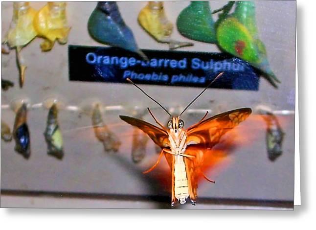 Butterfly Greeting Card by Elizabeth Hoskinson