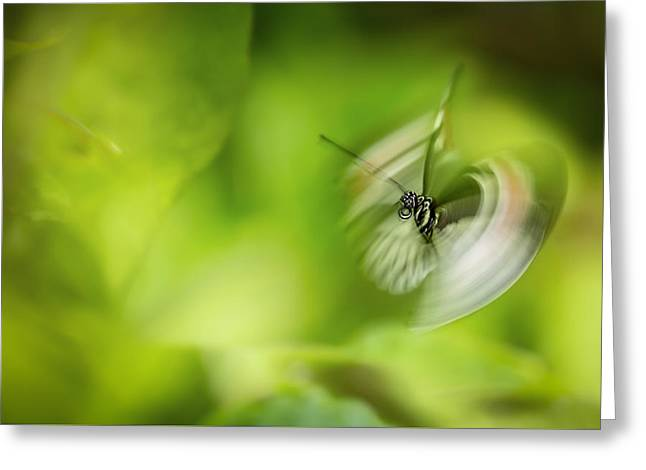 Butterfly In Motion Greeting Cards - Butterfly Enegry Greeting Card by Jennifer