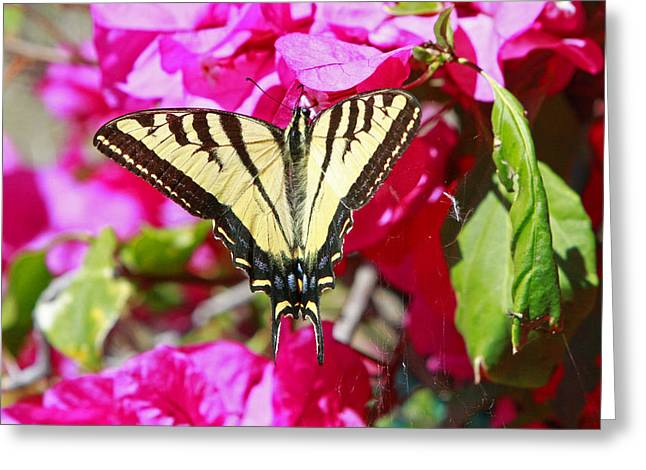 Butterflies Pyrography Greeting Cards - Butterfly Feeding Greeting Card by Shoal Hollingsworth