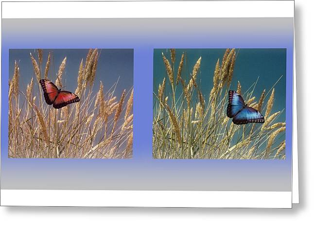 Farmers Field Greeting Cards - Butterfly Fields of Grain Greeting Card by David Dehner
